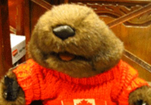 Travel-Mascot-Justin-Beaver