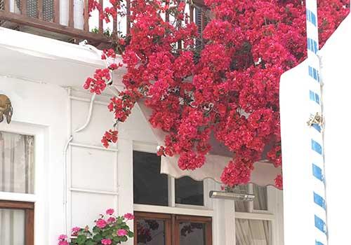 Mykonos - flowers