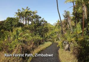 Rain Forest path in Zimbabwe