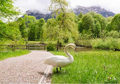 Oberammergau-countryside