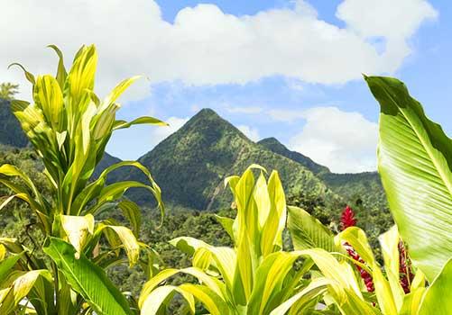 Martinique - volcano