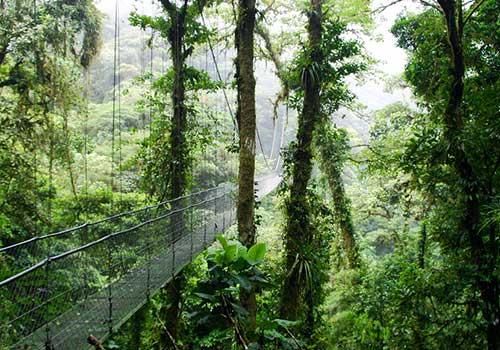 Costa-Rica-Cloud-Forest