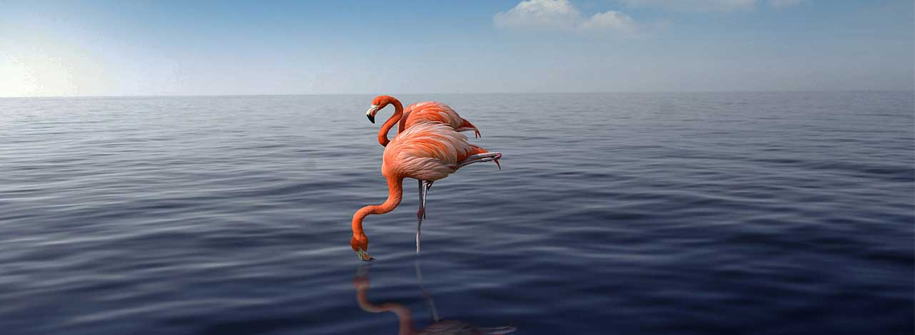 ABC Islands - Flamingos