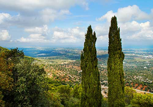 Puglia-Countryside-with-olive-groves