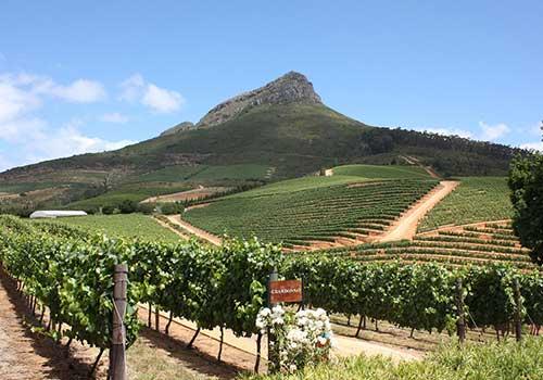 Winelands-vineyard