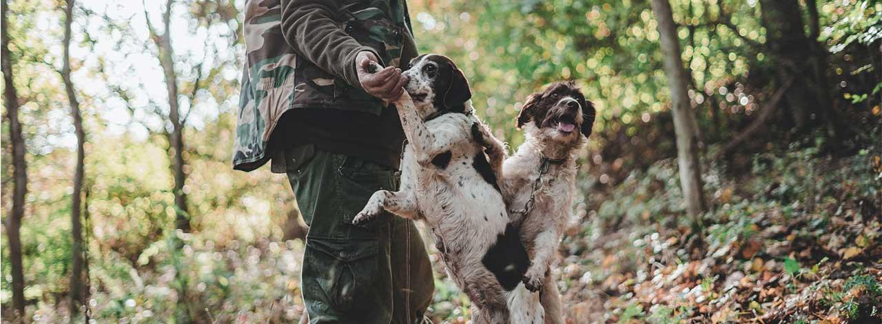 Truffle Hunting - Truffle Hunting Dogs