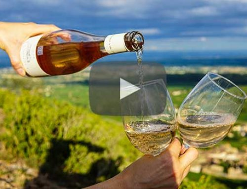 Wine Cruise Vacations Reviewed | An Interview with Barbara Young
